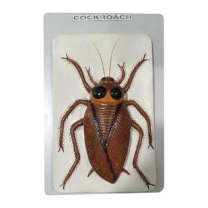Model of Cockroach