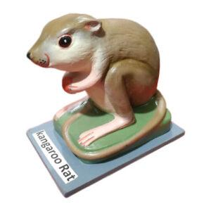 Model of Kangaroo Rat