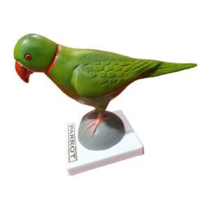 Model of Parrot