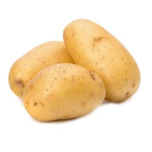 Big Size Potato for Examination of Plant Flora