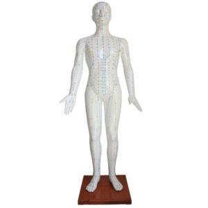 Acupuncture Model 178CM