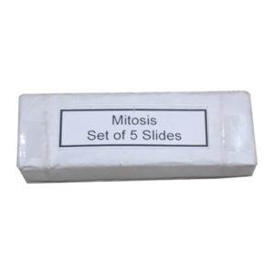 Mitosis Permanent Slide 1 Set